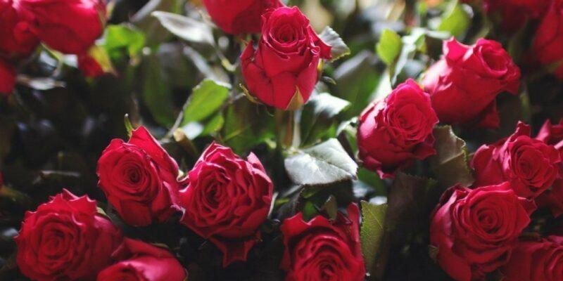 گلهای رز
